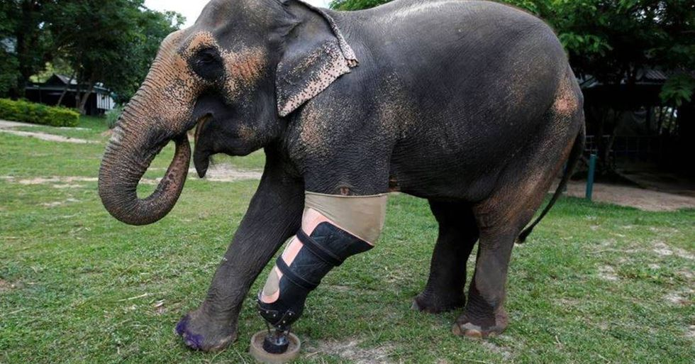 Thailand Animal Hospital Helps Elephants Injured By Land Mines