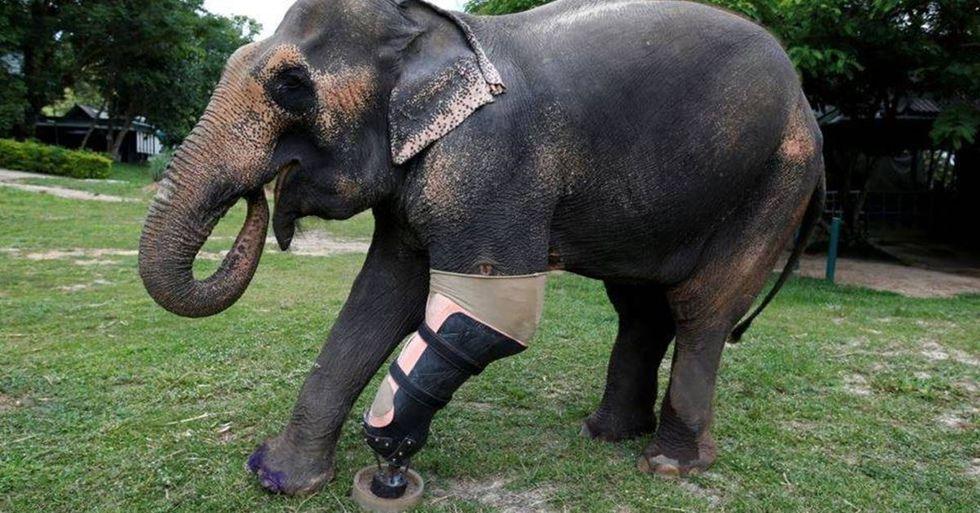 Thailand Animal Hospital Helps Elephants Injured By Land Mines