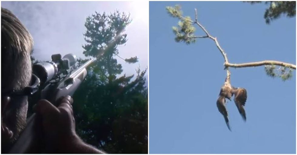 Army Sharpshooter Frees Bald Eagle Dangling From a Tree Branch