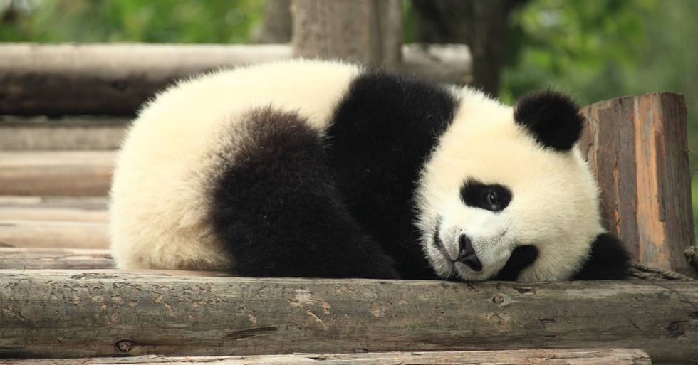Eating Endangered Species Is Now Illegal In China