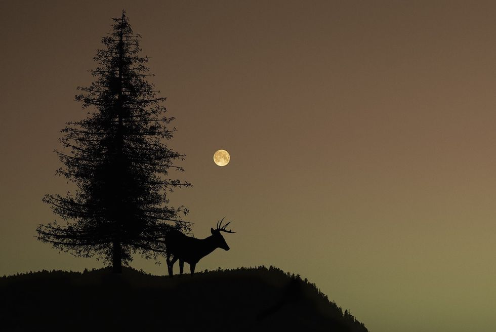 "Here's Everything You Need To Know About Tonight's ""Buck Moon"""