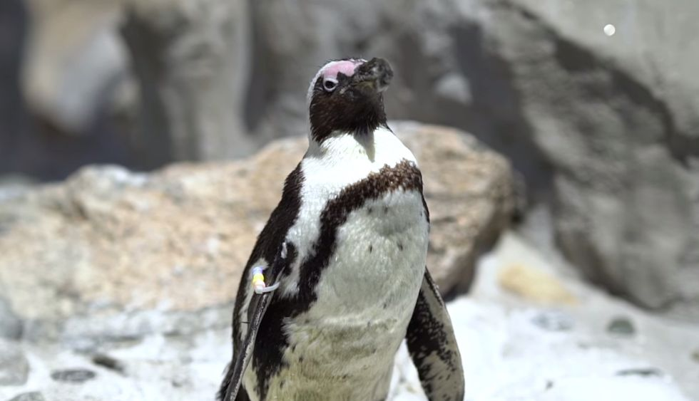 These Ingenious Middle Schoolers Used Advanced Technology To Help A Little Penguin