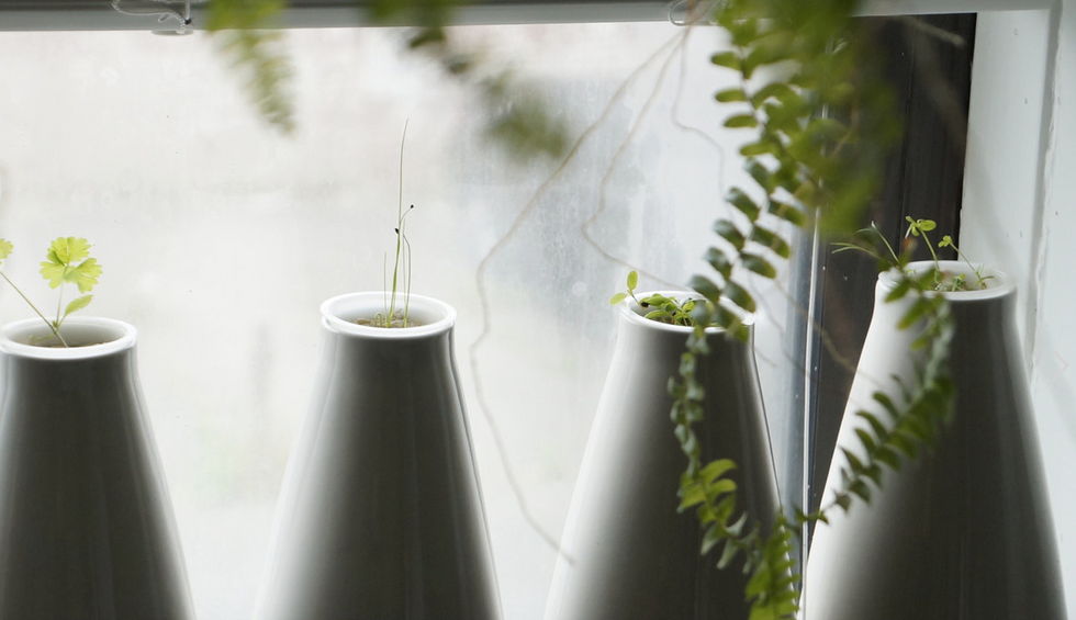 Now You Can Grow Your Food In The Cloud