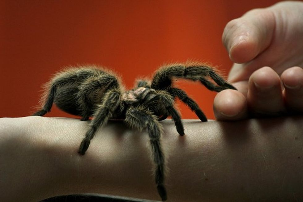 British Zoo Just Hatched 200 Creepy, Crawly Tarantulas And Somehow That's Not At All Scary