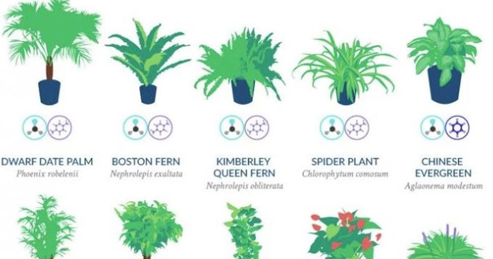 NASA says these 18 plants are the best at naturally filtering the air in your home.