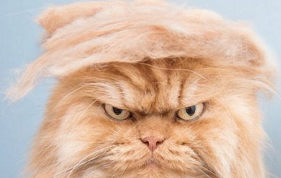 The 7 People (And Pets) We'll Miss The Most Once The Election Is Over