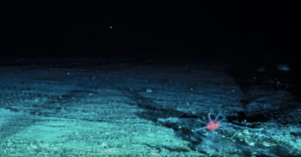 You Really Can't Imagine How Deep The Ocean Is