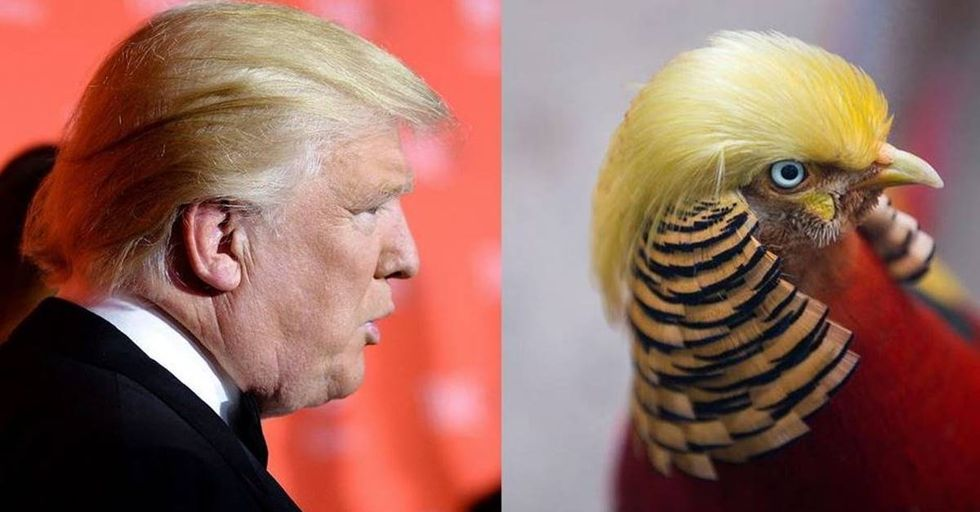 Bird Living In A Chinese Zoo Looks Just Like Donald Trump