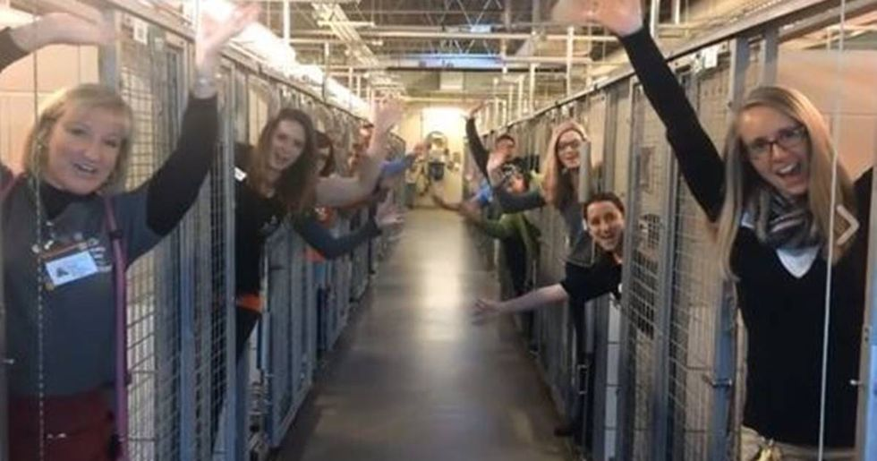 Animal Shelter Celebrates After Every Dog At Their Facility Was Adopted