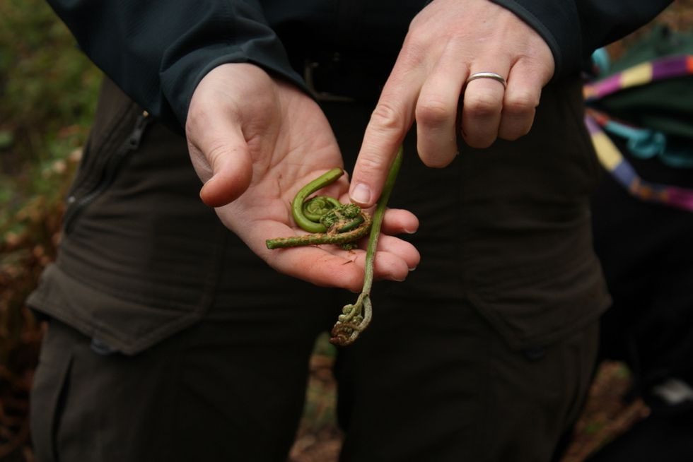 The Fiddlehead Is The World's Most Magical Vegetable