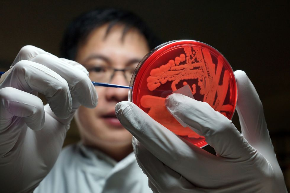 The Next Wave Of Treatment For Superbugs