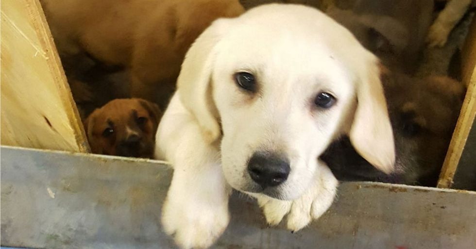 Yes, You Probably Need A Story About 100 Puppies Being Rescued
