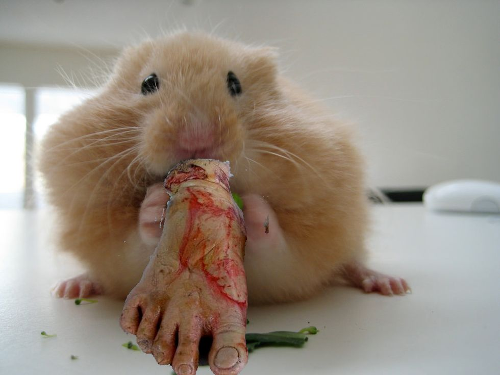 Researchers Accidentally Turned A Crop Of Hamsters Into Cannibals