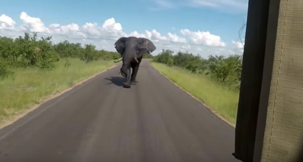 An Annoyed Elephant Literally Ran Invasive Tourists Right Out Of Town