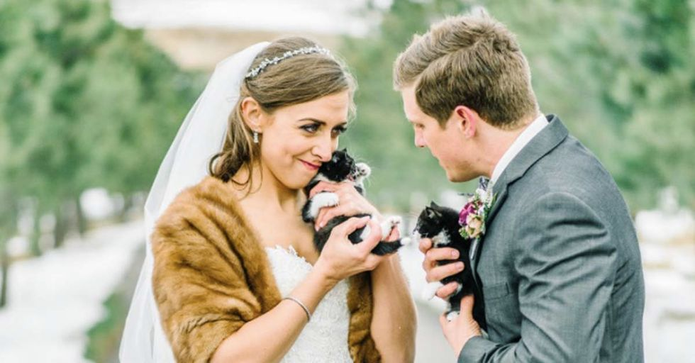 Two Vets Featured Some Furry Guests of Honor At Their Wedding, All For The Benefit Of A Rescue Shelter