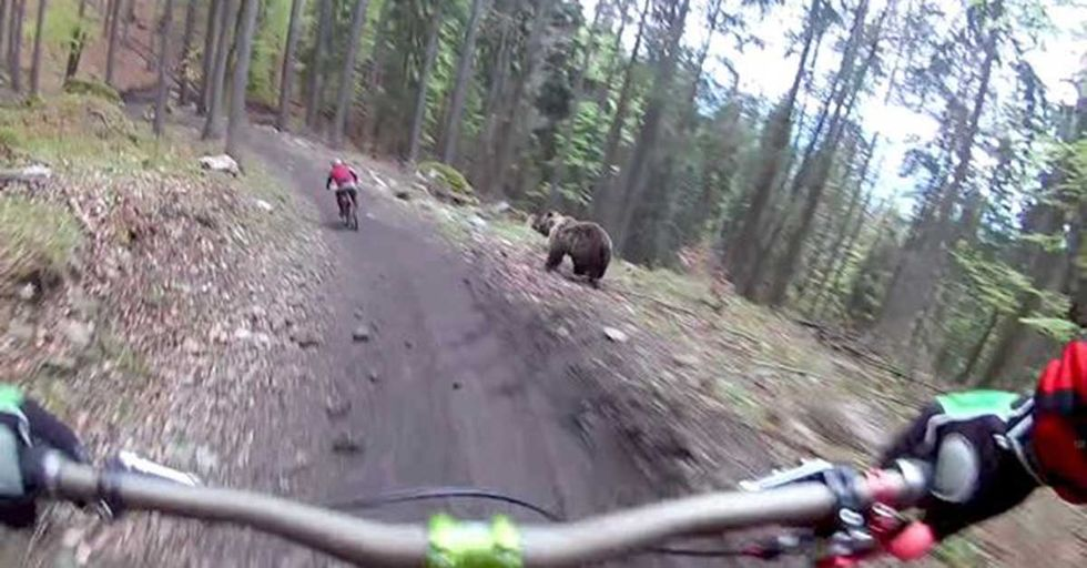 Random Act Of Sport: Mountain Bikers Outrun One Very Fast Bear