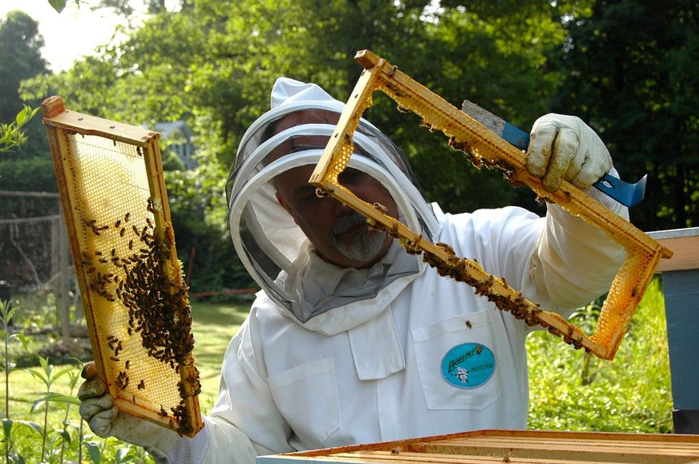 How Buzzing Bees Are Helping Save Themselves