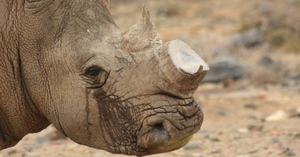 This Man Selling Off 1,100 Pounds Of Rhino Horns Might Not Be As Despicable As You Think