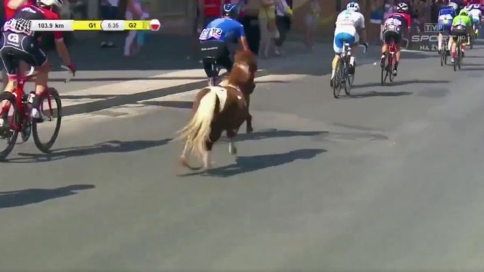 Random Act Of Sport: Small Horse Invades Cycling Race, Keeps Pace Just Fine