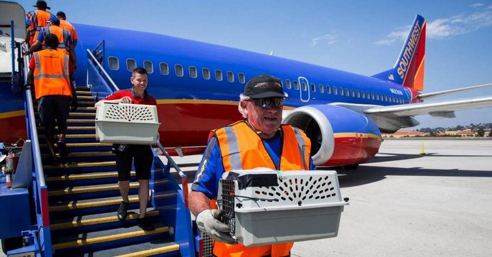 Southwest Airlines Chartered A Special Plane To Help Pets In Hurricane Harvey's Aftermath