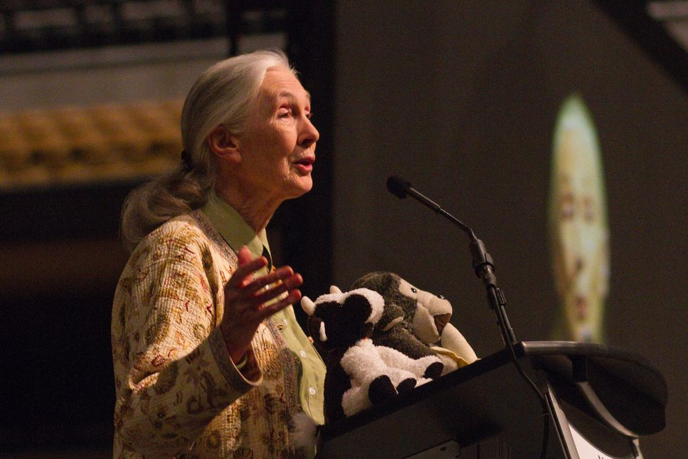 Jane Goodall Makes A Simple Case For Encouraging Kids To Be Curious