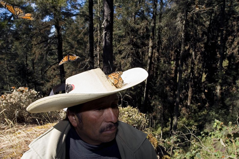 Every Fall, Monarch Butterflies Travel An Epic 3,000 Miles — But They're A Little Late This Year