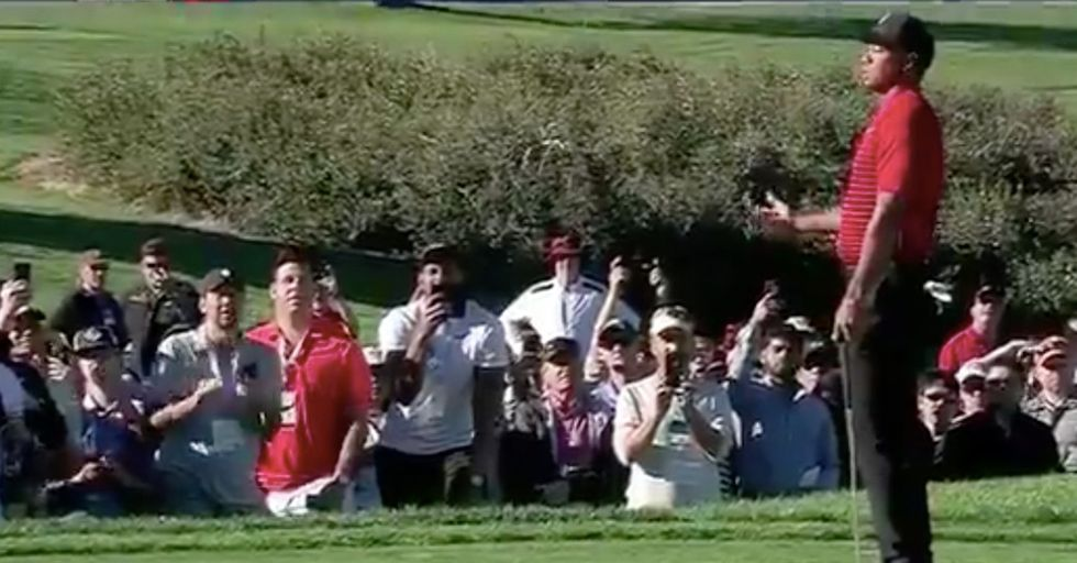 Clueless Golf Fan Causes Tiger Woods To Miss His Birdie Putt
