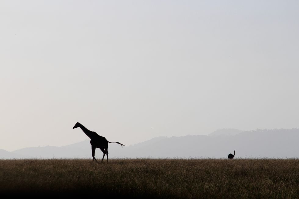 This Safari Reaches For New Heights In Conservation