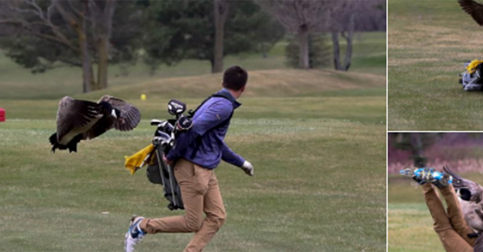A Goose Attacked A High School Golfer, And The Pics Are Epic