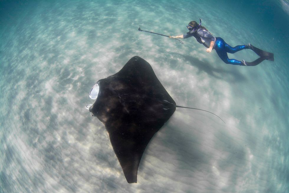 This Woman-Led Conservation Team Is Protecting Giant Gentle Manta Rays