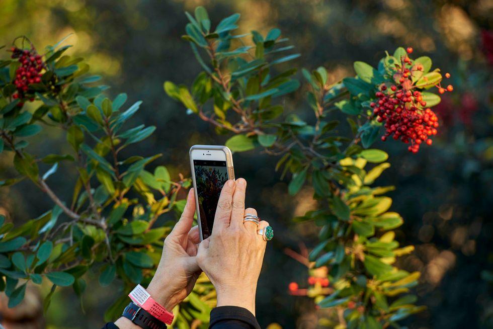 Thousands Of Volunteer Conservationists Crowdsource Urban Nature Photos Around The Globe