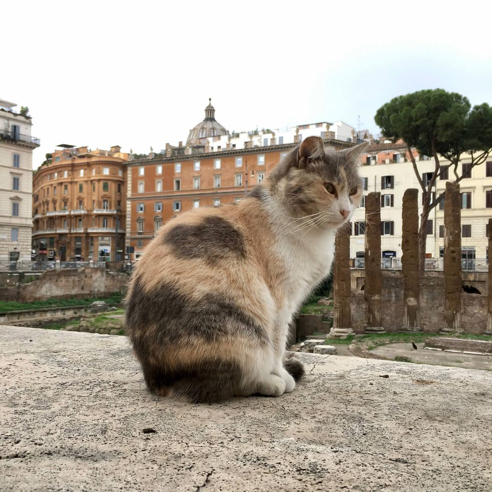 The Cats Of Rome Make Ruins Their Home