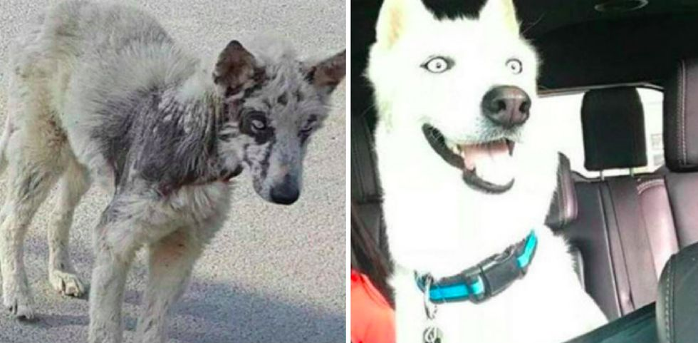 15 adorable doggies before and after being adopted.