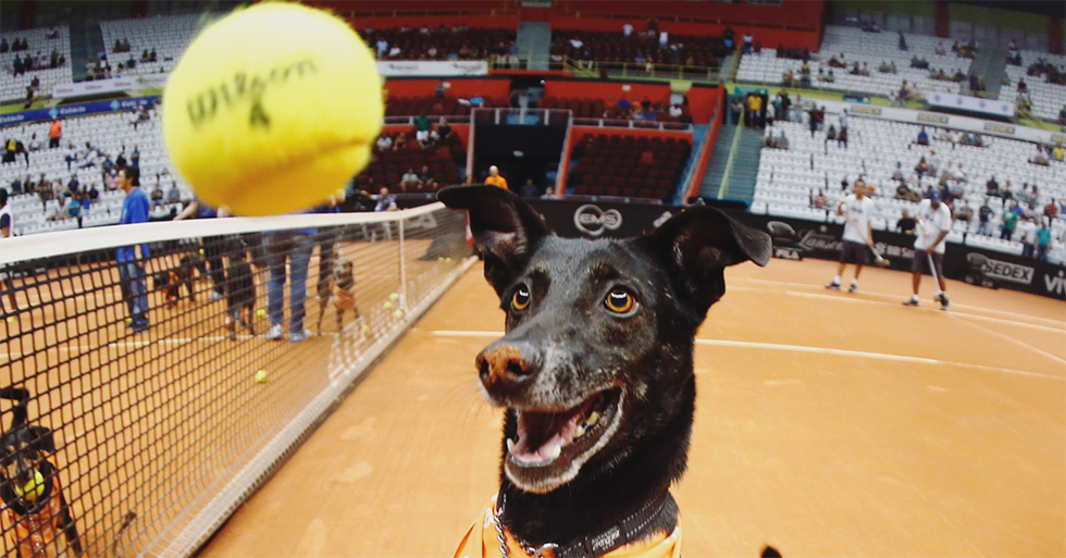 The Brasil Open Used Some Very Photogenic Rescue Dogs As Ball Boys And Girls