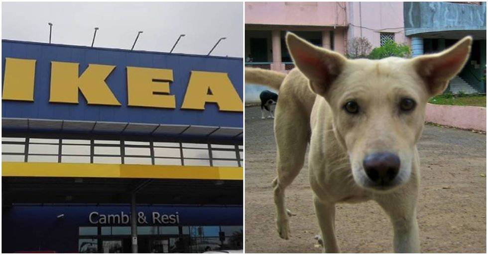 This Italian Ikea found an adorable way to help stray dogs when it's cold outside.