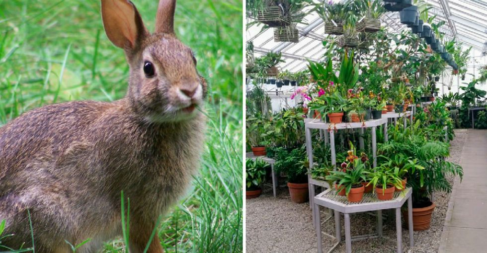 Scientists just used rabbit DNA to create a new kind of powerful, air purifying plant.