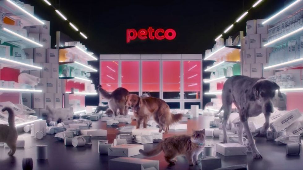 Petco just became the first major retailer to ban artificial ingredients in dog and cat food.