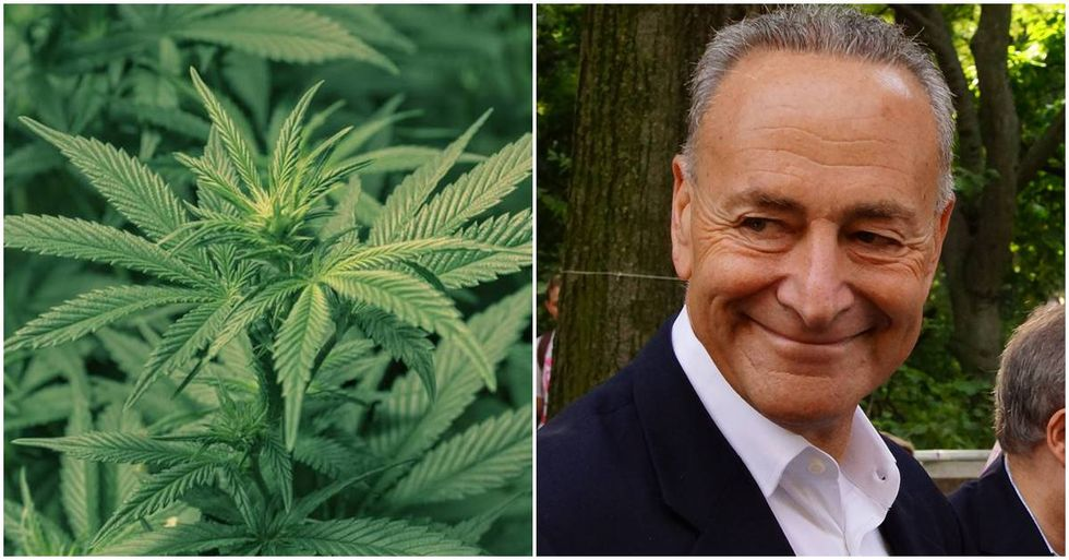 Chuck Schumer Celebrates 4/20 By Introducing A Bill To Legalize Weed