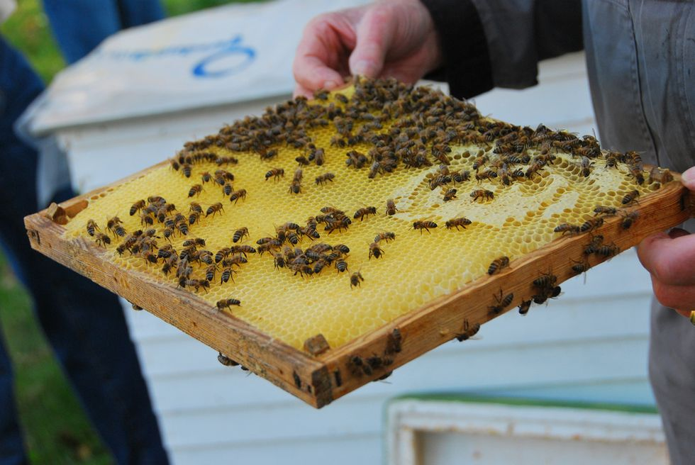 Beekeeping Offers a Sweet Future for Former Inmates