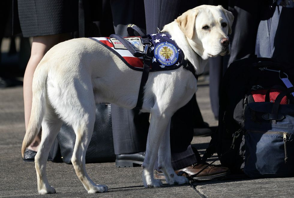 A picture of George H.W. Bush's service dog has everybody in tears.
