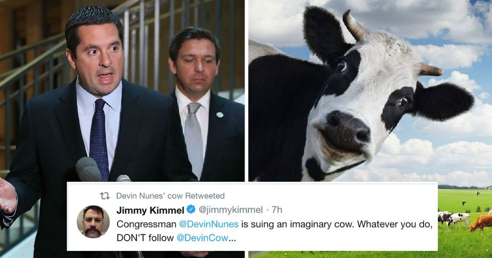 This congressman sued a Twitter account written by an imaginary cow. Now it has more followers than him