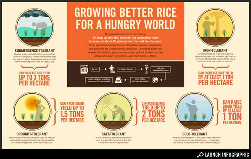 Growing Better Rice for a Hungry World