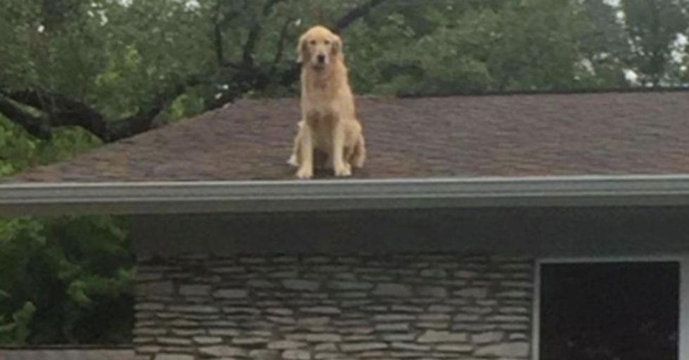 Family Posts A Very Chill Note To Neighbors Explaining Why Their Dog Is On The Roof