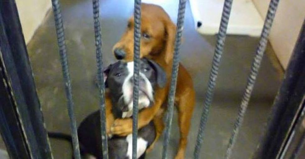 A Photo of Two Dogs Hugging Saved Them From Being Euthanized