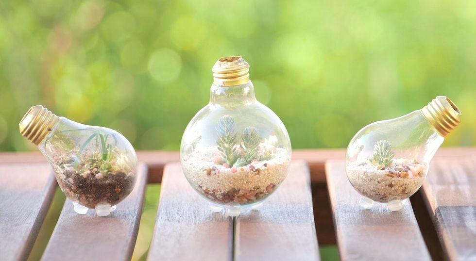 How to Upcycle: Old Lightbulb into Terrarium