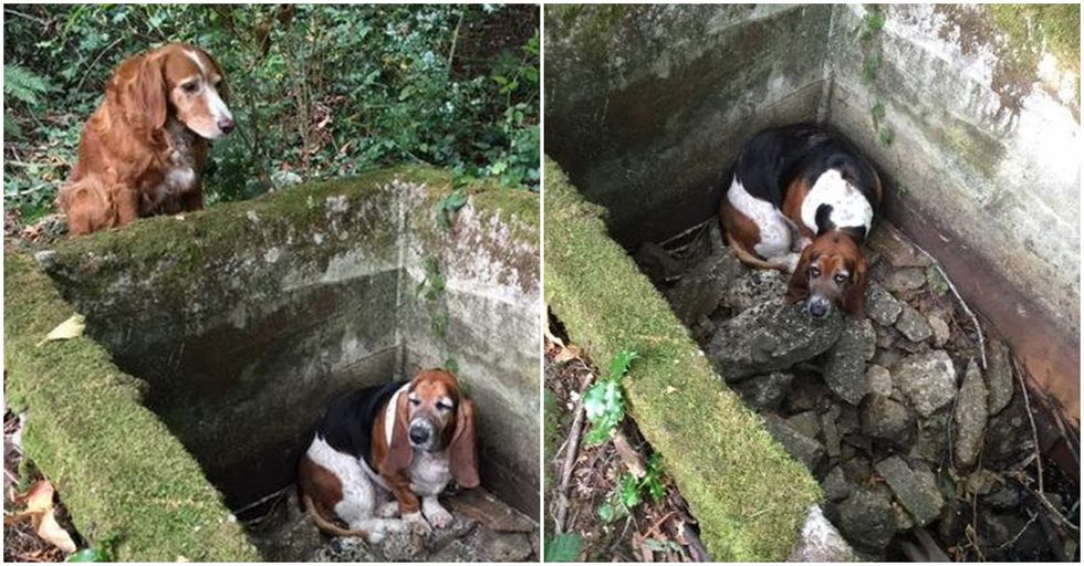 Dog Holds Vigil Over Trapped Friend for a Week
