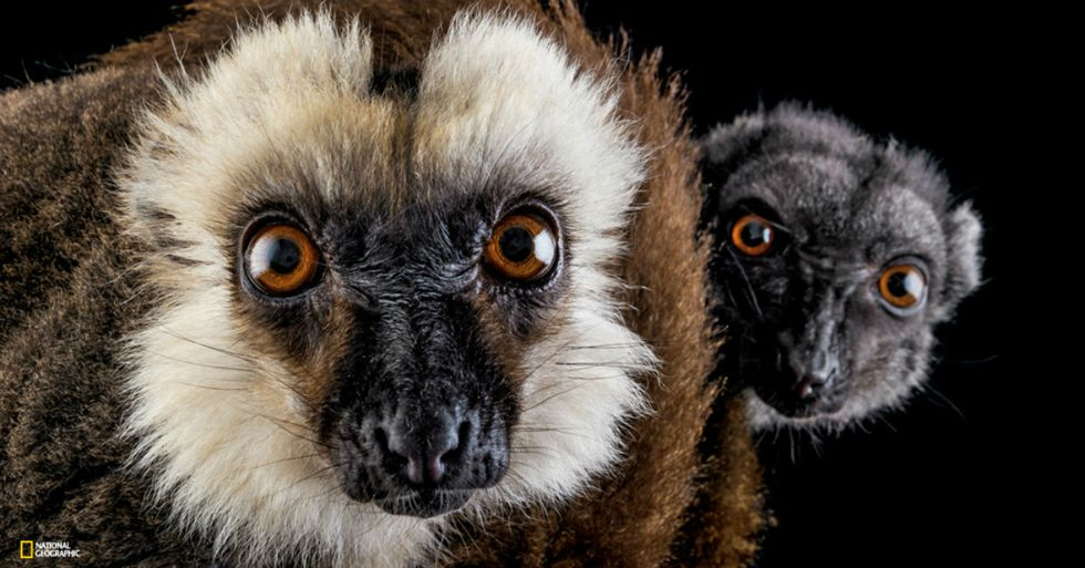 8 Animals Really Feeling the Effects of Climate Change