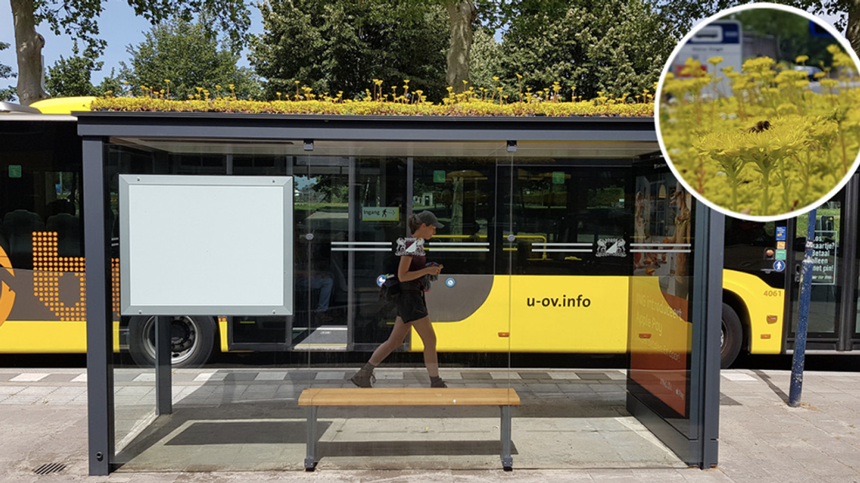 This Dutch City Has Transformed Its Bus Stops Into Bee Stops