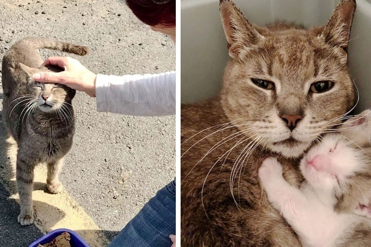 Cat So Happy to Be Rescued with Her Kittens After Years Wandering the Streets