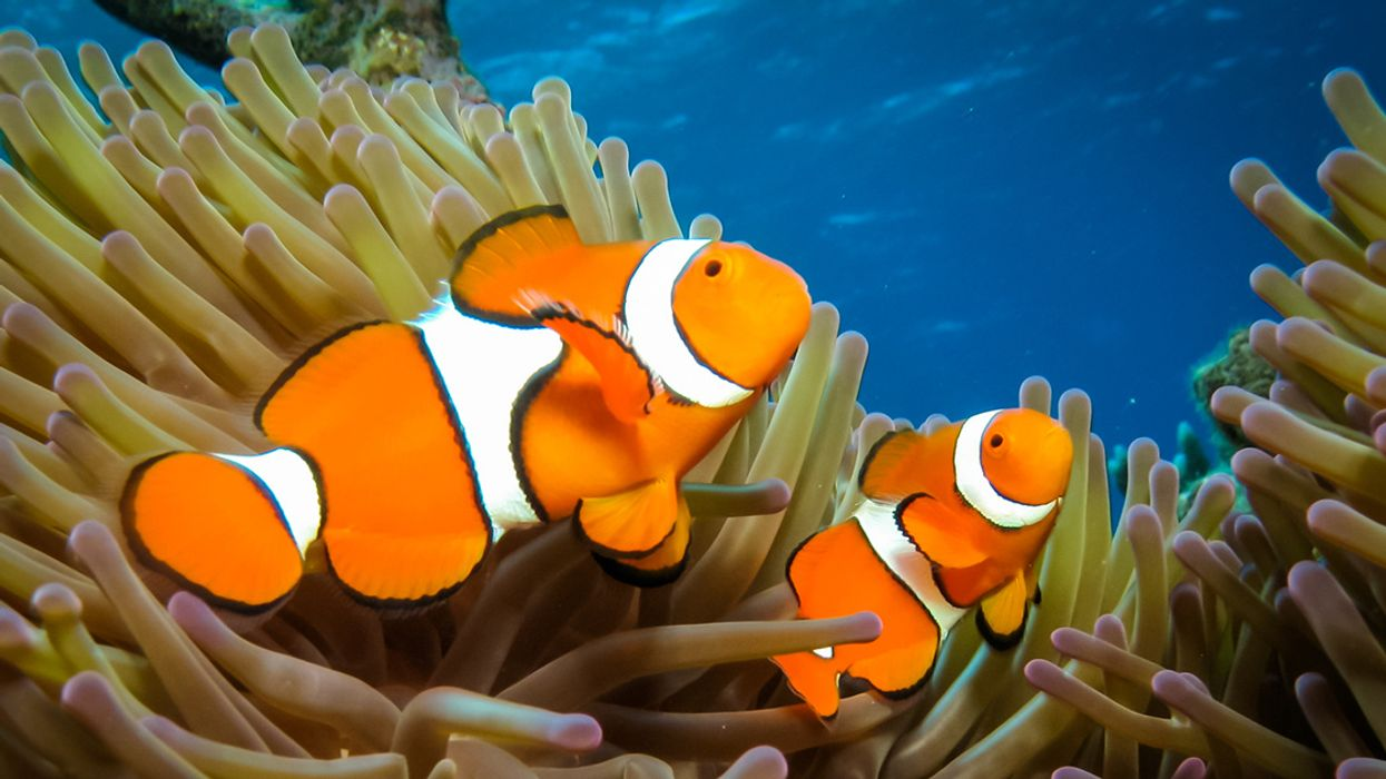 Losing Nemo? Nighttime Light Pollution Can Stop Clownfish From Hatching, Study Shows